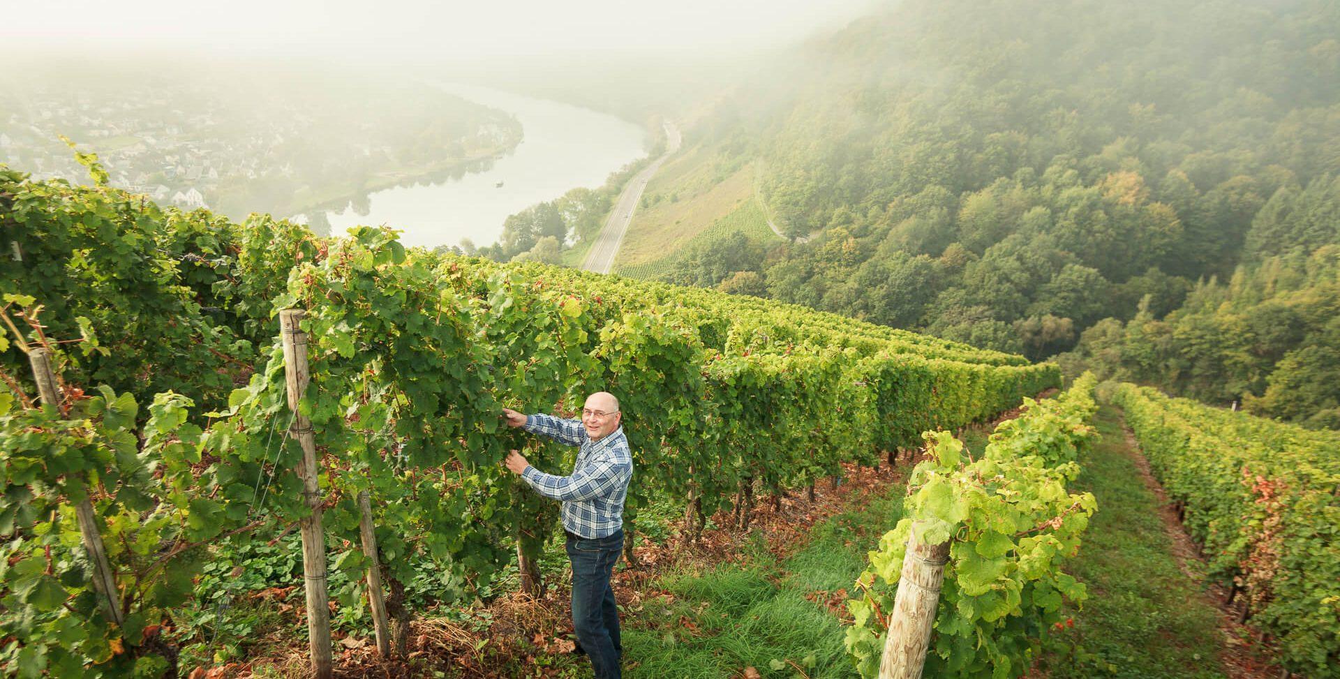 Winzer im Steilhang mit Moseltal im Hintergrund; Arbeit im Weinberg, Riesling Reben an der Mosel